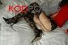 หลอกเลขาสาวมามอมเหล้า แล้วผลัดกันกระเด้า - จิ๋มจีน จิ๋มคนจีน จิ๋มเจ๊ก จิ๋มหมวย - kodporno.com รูปโป๊ ภาพโป๊